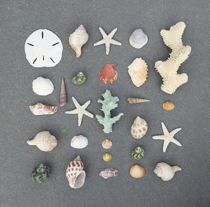 Collecting stuff from the beach for art projects.