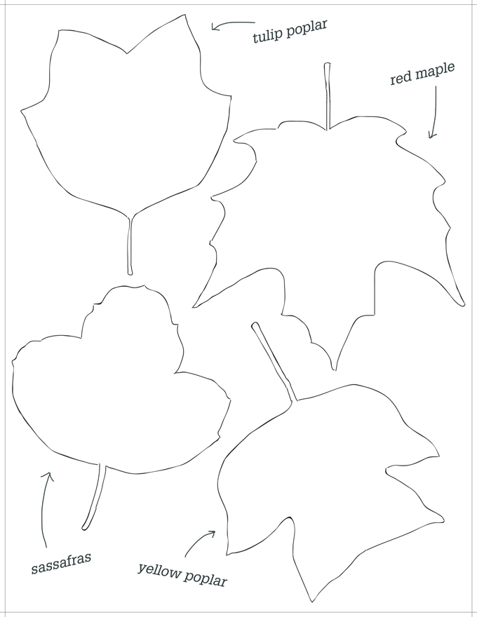 Connecticut Leaf Shape Templates